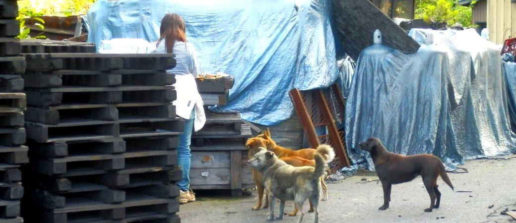 立ち入り禁止区域に残され、多くの人達の思いと行動で助かった犬の一家